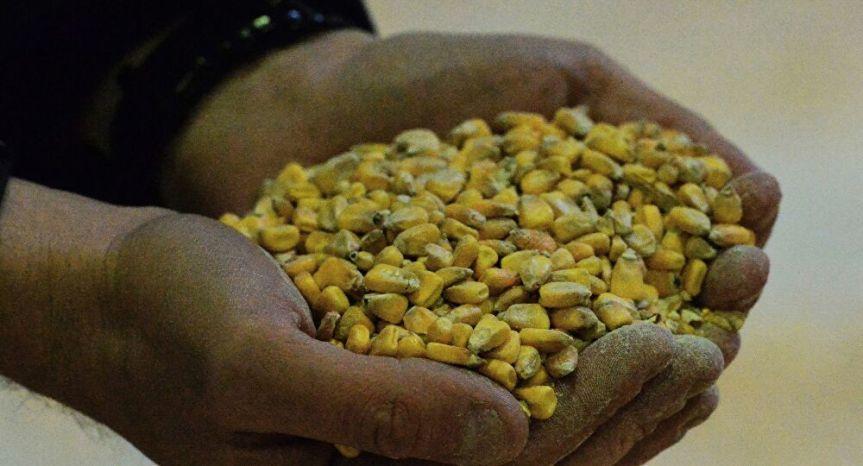 Agroempresarios bolivianos se unen en defensa de las semillastransgénicas