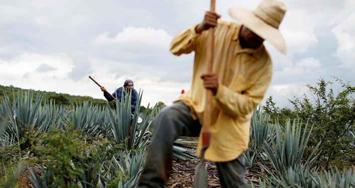 Embajada mexicana confirma consultas con Rusia sobre el futuro de suministros detequila