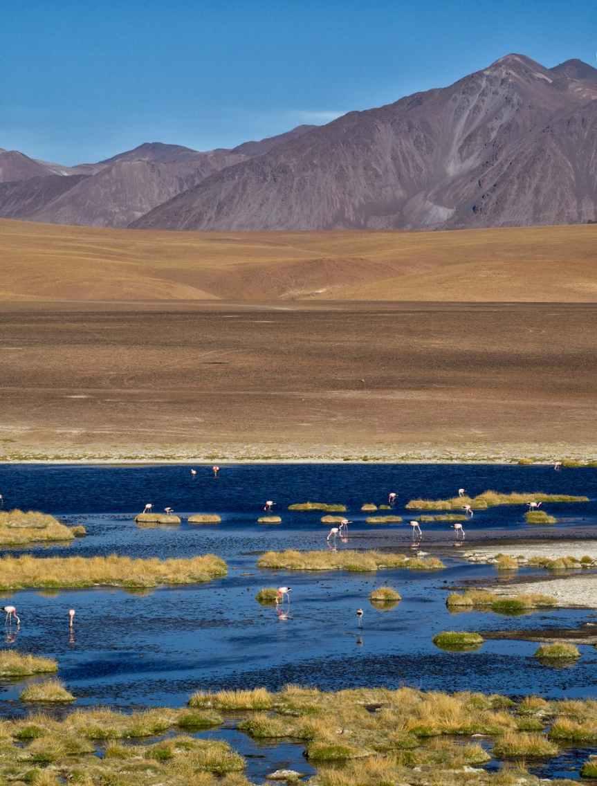 ¿Porque Starlink escogió Chile ante otro país de AméricaLatina?