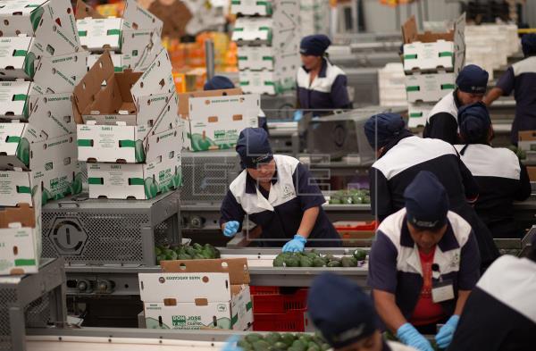 Analistas elevan estimación de crecimiento del PIB mexicano a6,06%